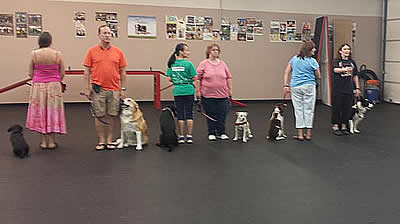 Pictures of advanced obedience class